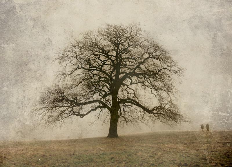 3683 Greenwich Park Oak