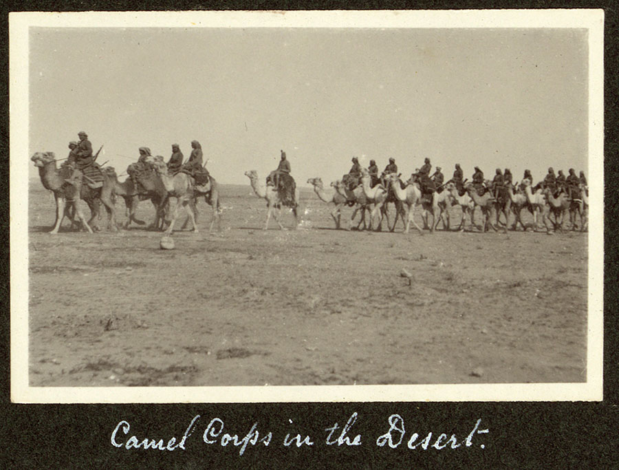 camel-in-war-1