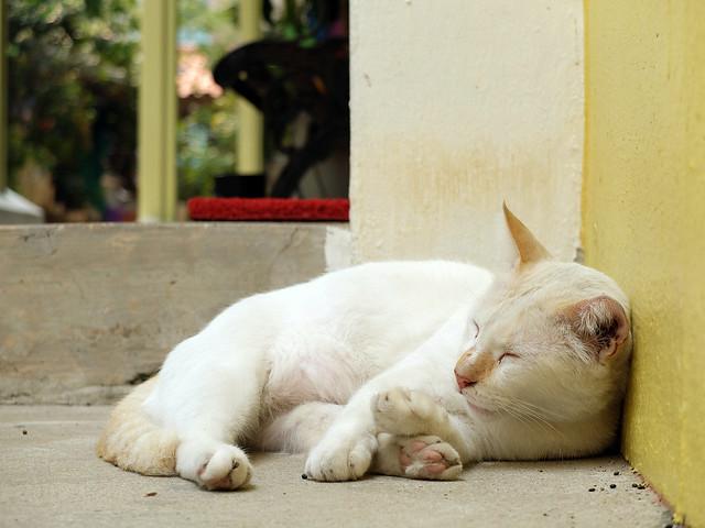 Cat3sharpness