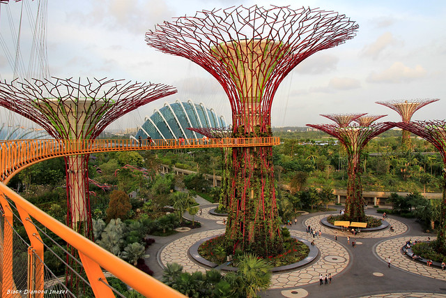 Supertree Grove Aerial Boardwalk, Gardens By The Bay South, Singapore