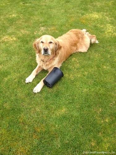 Wed, Oct 8th, 2014 Lost Male Dog - Nr. R448, Blackhall, Kildare