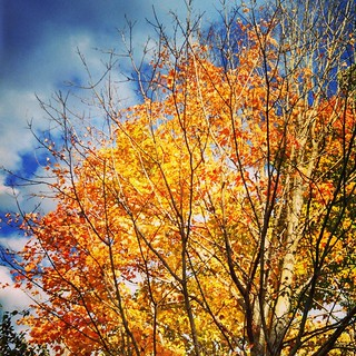 Happy Columbus Day Weekend! #fall #newengland #foliage #tree #leaves #sky #clouds #leafpeeping #newhampshire