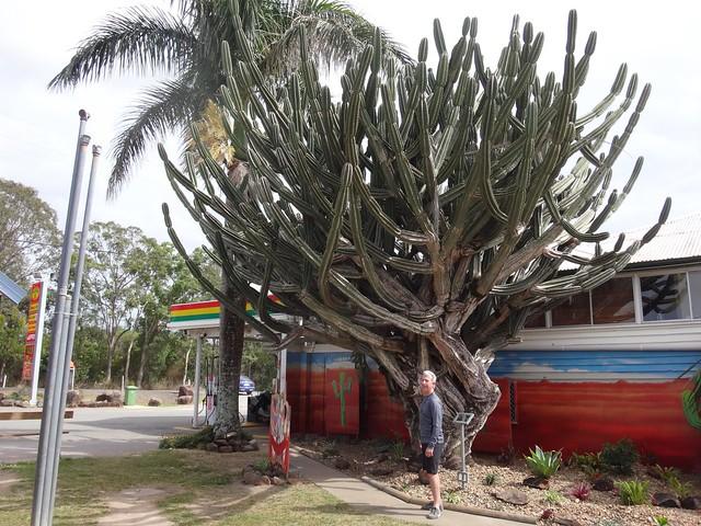 Goomboorian Cactus