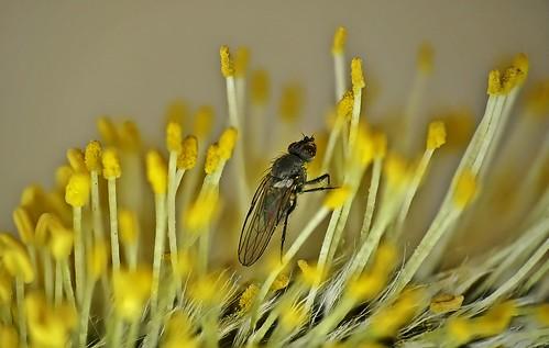 Early Pollinator