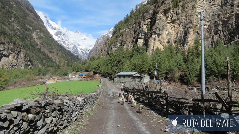 Circuito del Annapurna Nepal (11)