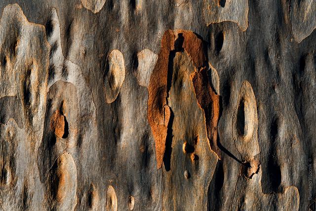 Flaking bark