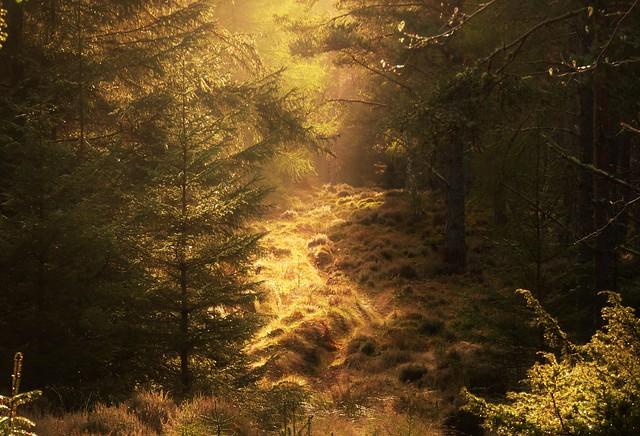 Hazy Sunlight..x