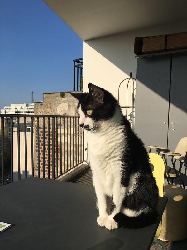 A Cat, A View