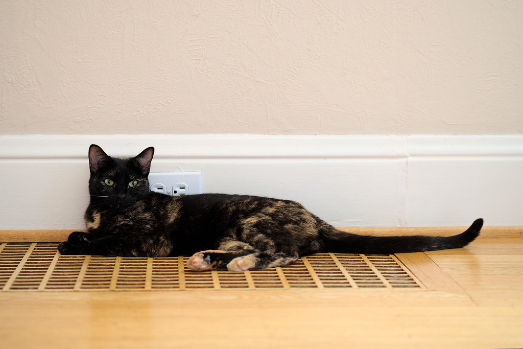 Our tortoiseshell cat Trixie rests on the wooden heating vent