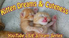 Kitten Dreams & Cuteness