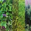 #textures in my #garden