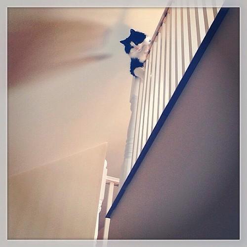 #fmsphotoaday September 25 - Angle #catsofinstagram #tuxedocats