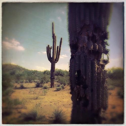 arizona cactus southwest nature landscape outside outdoors desert az sonorandesert anthem saguaros hipstamatic robustafilm sergiolens