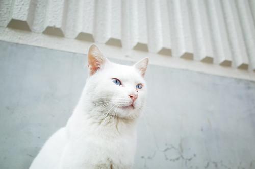 Cat in Kitasenju