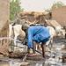 Corvee d'eau, pres de Mbane, Region de Saint Louis, Senegal by simone_frattini