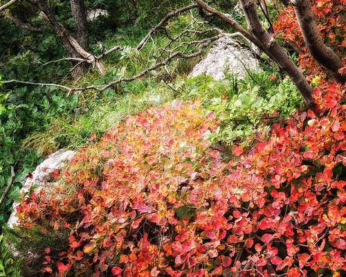 autumn trees mountain fall colors fog forest landscape colours hiking croatia trail