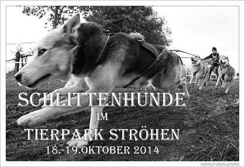 Schlittenhunde-im-Tierpark-Ströhen