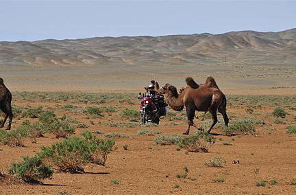 Jewels of Mongolia
