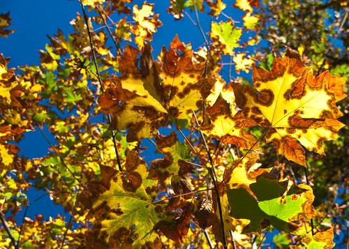 09-26-14 Tie Dye Leaves