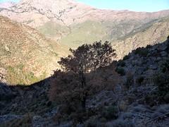 Le versant W de la pointe 673m devant le Capu Selulla