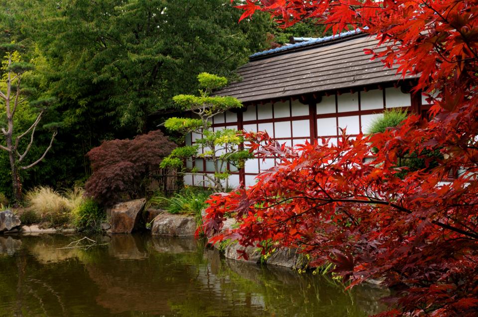 Jardin-Japonais-2