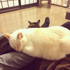 寒いですか。 #cat