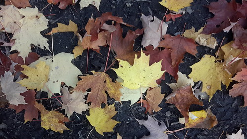 Yellow leaves on brown