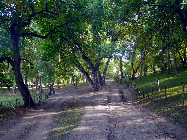 12) The Forest Road