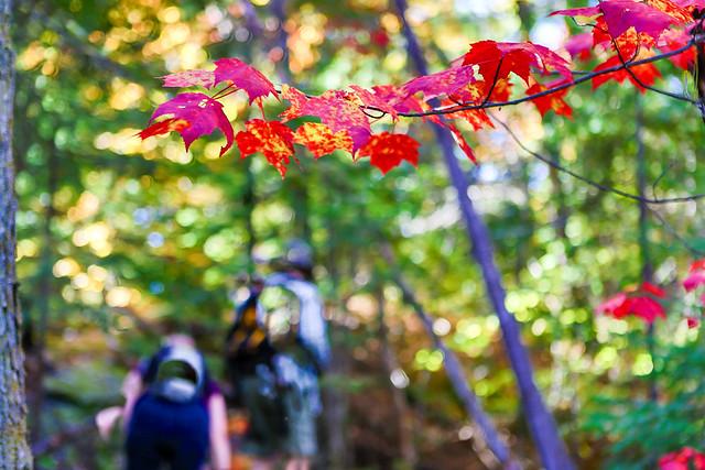 Ontario Fall Colours