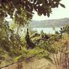 #lake #landscape #castelgandolfo