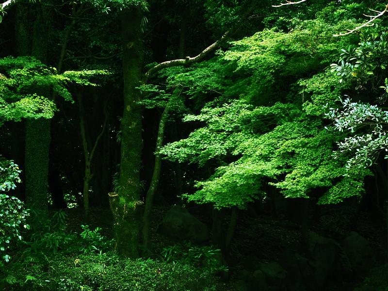 宮崎市中央公園