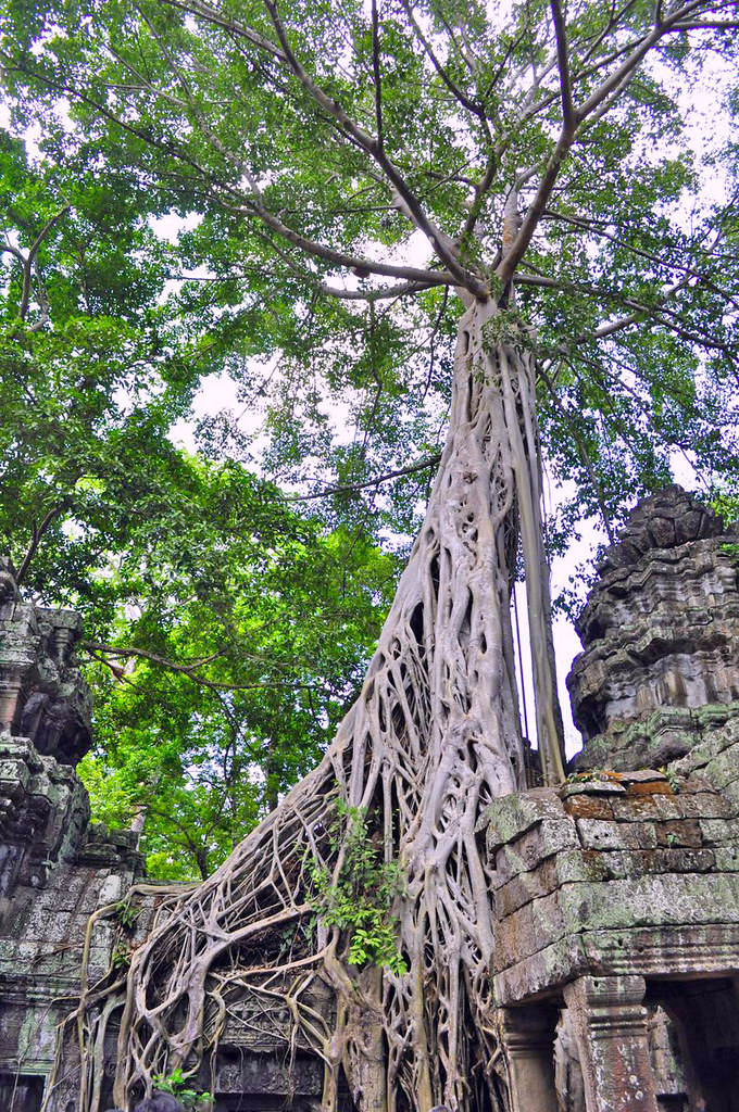 Templo de Ta Phrom en Angkor (Camboya) visitar los templos de angkor en un día - 15291760319 7abbe7f0bd b - Visitar los templos de Angkor en un día