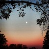 Moonset / reveals her name, / and lost secrets / of the craggy pine, / wishing she was a maple #sunrise #5lines #trees #autumn