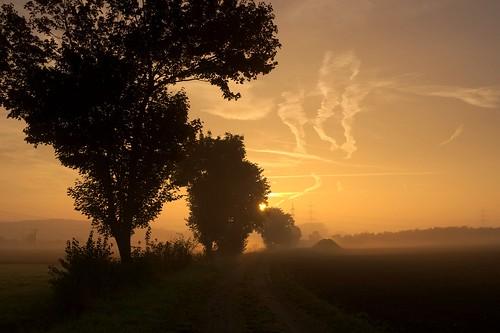 trees sun tree field misty sunrise germany bayern deutschland bavaria nebel minolta sony feld sonnenaufgang sonnenstrahlen nebelig sonyα900 everydayisdifferent minoltaaf50mm114 gfje