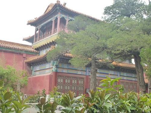 Beijing-Cité Interdite-Jardin Impérial (9)