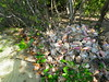 Queen Conch Debris