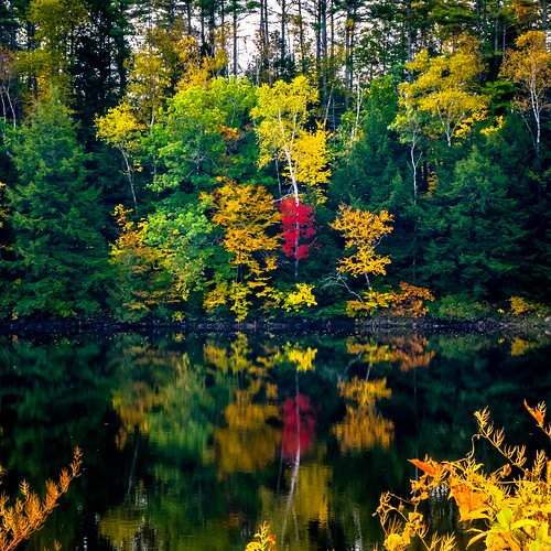 usa river maine foliage waterscape