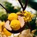Yellow lemon dessert bar