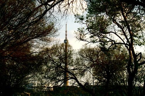 trees minolta suburban dynax7d brixton johannesburg melville brixtontower sentechtower albertherzogtower