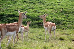 Longleat Safari & Adventure Park 24-09-2013