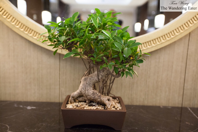 Small bonsai tree at the Spa level