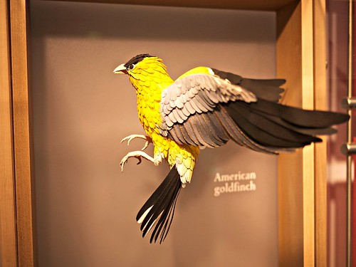 Paper sculpture birds by Diana Beltran Herrera