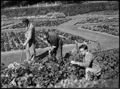 Flowers at King Edward Park, Newcastle, 1953