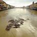 FOTO  1 - Pisa, Piena dell' Arno (11/02/2014) by Stefano Paradossi