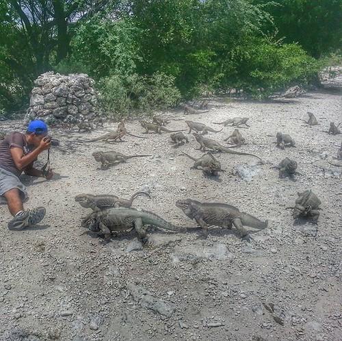 Las iguanas esas