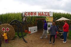 Corn Maze for $5 per person, all ages