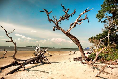 usa topaz jekyllislandgeorgia driftwoodbeach