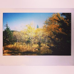 Fall Colors in the Roosevelt National Forest #believeinfilm #instax #fuji #snapitseeit #CO