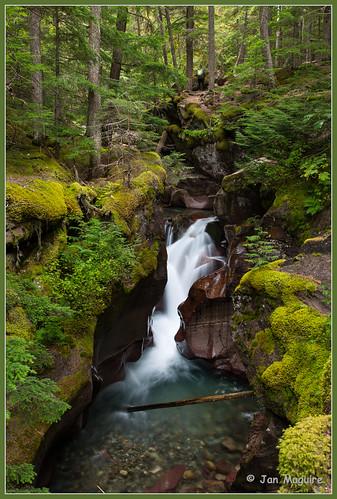 Avalanche Creek 2681