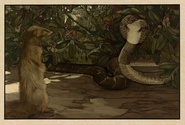 012-Rikki-Tikki-Sixteen illustrations of subjects from Kipling's Jungle Book-1903 -Library of Congress